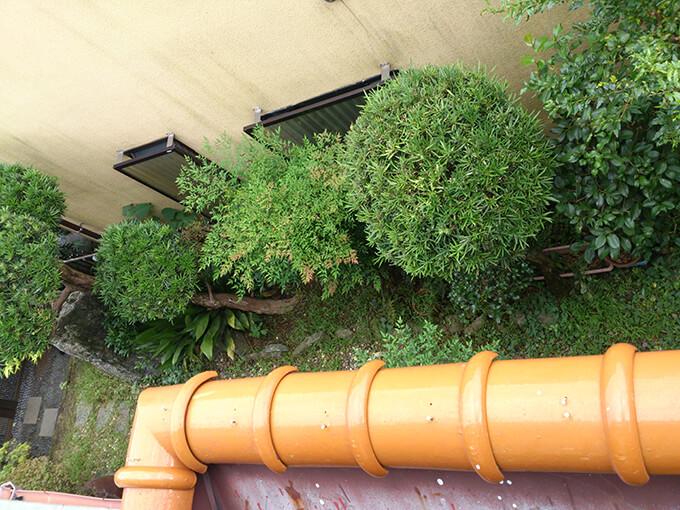 草まみれの庭をガーデニング