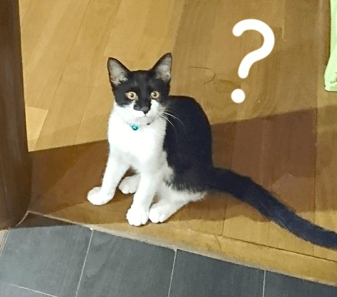 白黒の猫さん