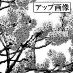 マンガ背景素材 桜 ソメイヨシノ